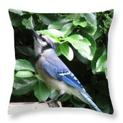 Blue Jay 1 Throw Pillow