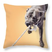 Blue Staffie Having A Tug Of War Throw Pillow
