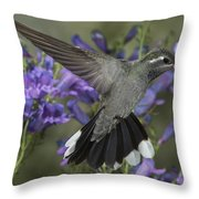 Blue-throated Hummingbird Throw Pillow