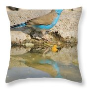 Blue Waxbill Reflection Throw Pillow