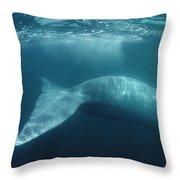 Blue Whale  Sea Of Cortez Mexico Throw Pillow