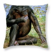 Bonobo Throw Pillow
