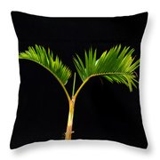 Bonsai Palm Tree Throw Pillow