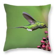 Booted Racket-tail Throw Pillow