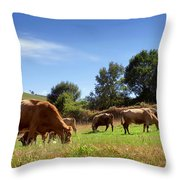 Bovine Cattle  Throw Pillow by Carlos Caetano