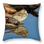 Brewers Sparrow At Waterhole Throw Pillow
