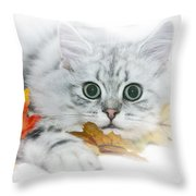 British Longhair Cat Throw Pillow by Melanie Viola