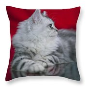 British Longhair Kitten Throw Pillow