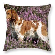 Brittany Spaniel Or Epagneul Breton Throw Pillow