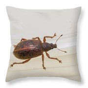 Broad-nosed Weevil - Polydrusus Mollis Throw Pillow