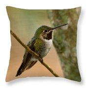 Broad Tailed Hummingbird Throw Pillow
