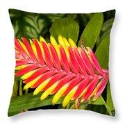 Bromeliad Blossom - Tillandsia Throw Pillow