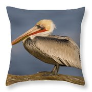 Brown Pelican Portrait California Throw Pillow