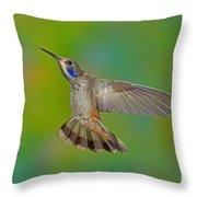 Brown Violet-ear Hummingbird Throw Pillow
