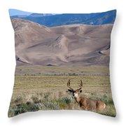 Buck At Great Sand Dunes Throw Pillow