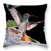 Buff-bellied Hummingbird At Nest Throw Pillow