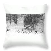 Bull Elk With Harem Throw Pillow