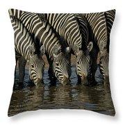Burchells Zebra Equus Burchellii Herd Throw Pillow