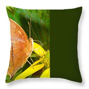 Butterfly Mimicry Throw Pillow