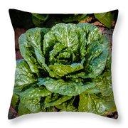 Butterhead Lettuce Throw Pillow
