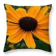 Butterscotch Daisy Throw Pillow