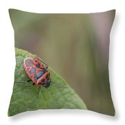 Cabbage Shield Bug Throw Pillow