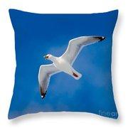 Calling Herring Gull Flying In Blue Sky Throw Pillow