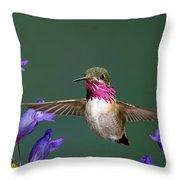 Calliope Hummingbird Stellula Calliope Throw Pillow