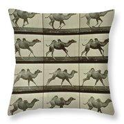 Camel Throw Pillow