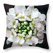 Candy Tuft Throw Pillow