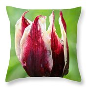 Candy Tulip Throw Pillow