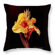 Canna Lilly In New Orleans Throw Pillow