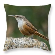 Canyon Wren Throw Pillow