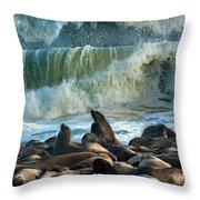 Cape Fur Seals Arctocephalus Pusillus Throw Pillow