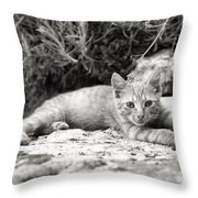 Cat And Lavender  Throw Pillow