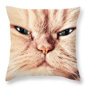 Cat Face Close Up Portrait Throw Pillow