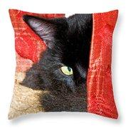 Cat Hiding Behind Drapes Throw Pillow