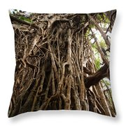 Cathedral Fig Tree Throw Pillow