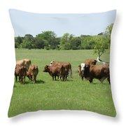 Cattle Grazing Throw Pillow