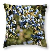 Cedar Blue Throw Pillow
