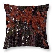 Cedar Throw Pillow