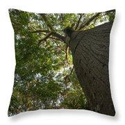 Ceiba Tree Throw Pillow