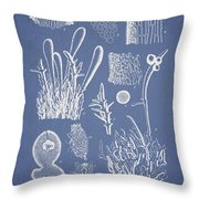 Ceratodictyon Spongiosum Zanard Throw Pillow by Aged Pixel