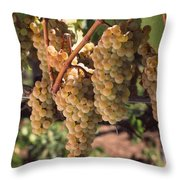 Chardonnay Grapes In Vineyard, Carneros Throw Pillow