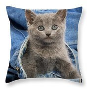 Chartreux Kitten Throw Pillow