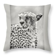 Cheetah Throw Pillow by Adam Romanowicz