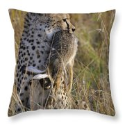 Cheetah Carrying Its Prey Throw Pillow