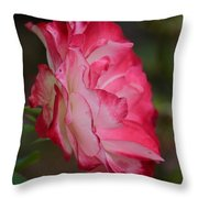 Cherry Cream Rose Throw Pillow