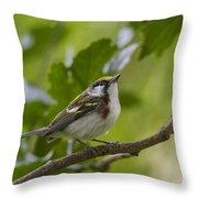 Chesnutsided Warbler Throw Pillow