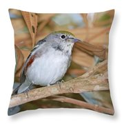 Chestnut-sided Warbler Throw Pillow